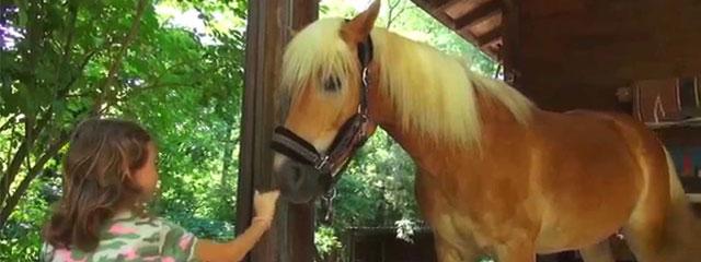 In giro a cavallo nelle pianure vicino Milano